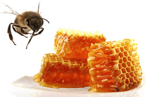 wholesale bee propolis powder natura- Lypharl.png